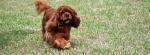This is Bobbie running
