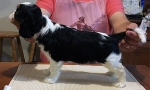 Jamie Stacked Puppy