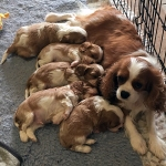 Mum with puppies