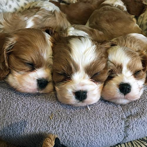 Puppy Cuteness