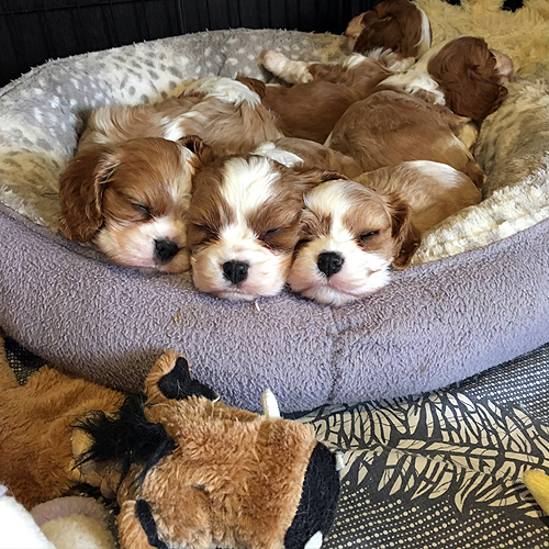 Puppy Sleep Time
