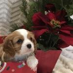 Tori Christmas